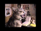 Cats With Farm Animal Noises (Funny)
