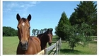 Horses Retire to Farm in Florida